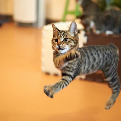 Cat can dance