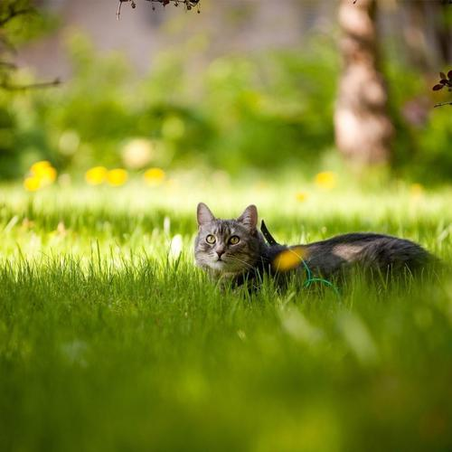 Cat exploring the green meadow wallpaper