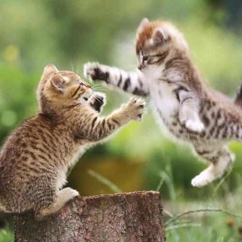 Cat Fight wallpaper