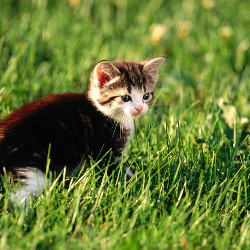 Cat In The Meadow wallpaper