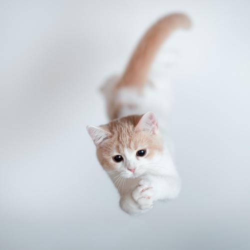 Cat jumping wallpaper