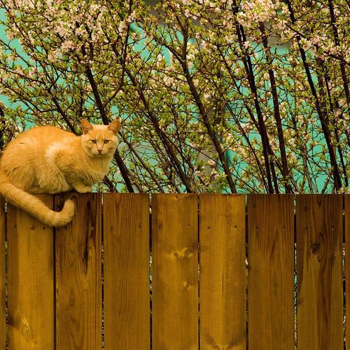 Cat on fence wallpaper