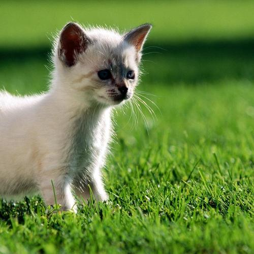 Cat on the green grass wallpaper