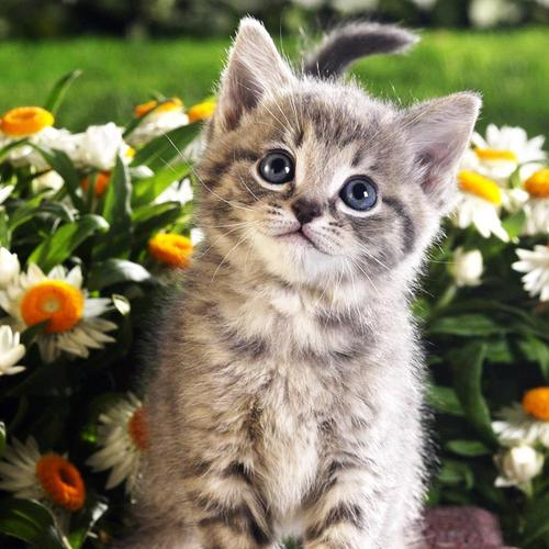 Cat sitting in flower wallpaper