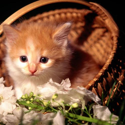 Cat with basket of flowers
