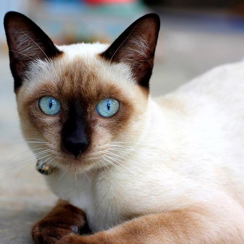 Cat with black nose and magical eyes