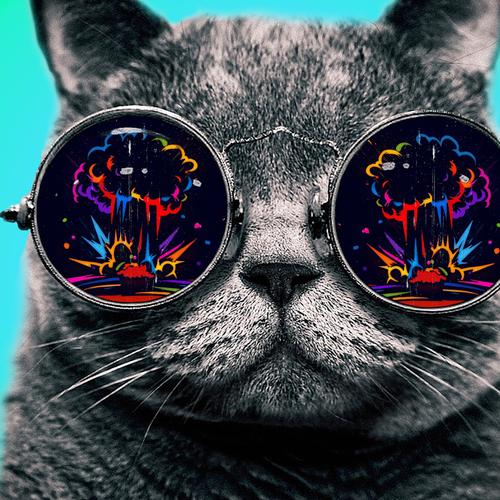 Cat with cool glasses wallpaper