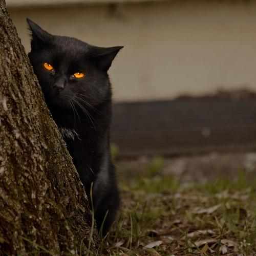 Cat with the Evil Look