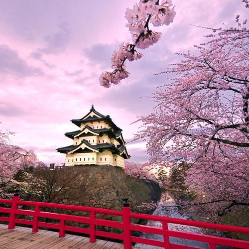 Cherry Blossoms with Japan castle