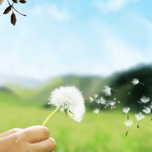 Child Girl Blowing Dandelion hintergrund