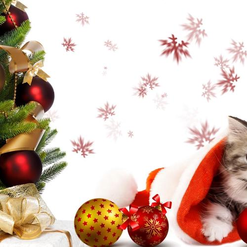 Download Christmas Tree and kitten High quality wallpaper
