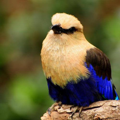 Close up colorful Perching bird