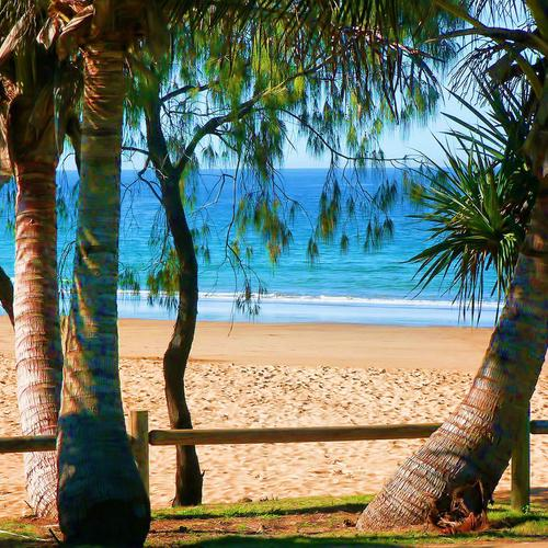 Coconut tree at the beach wallpaper