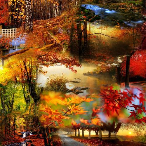 Colorful Autumn collection wallpaper