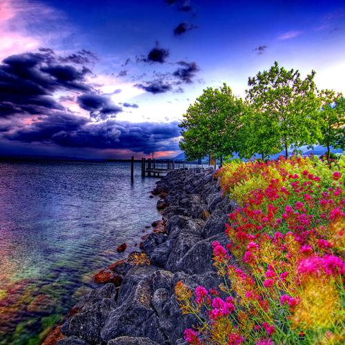Colorful flowers on seashore