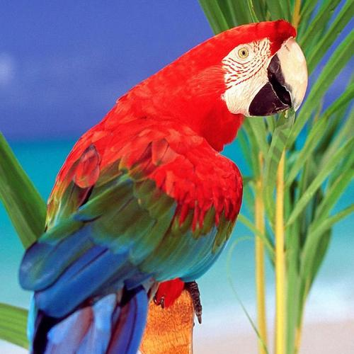 Colorful Parrot in paradise