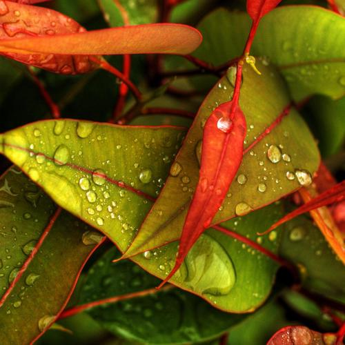 Colourful leaves wallpaper
