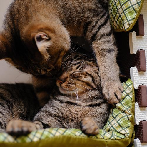 Couple cat in love