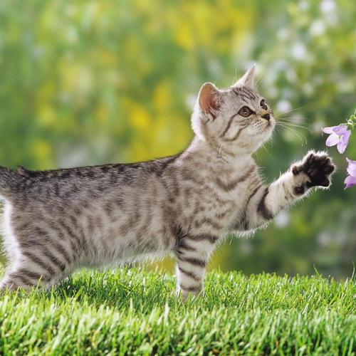 Curious cat playing with flowers