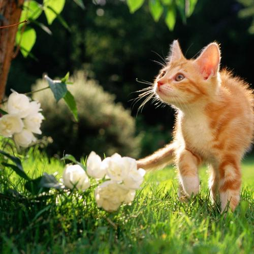Curious kitten and flowers