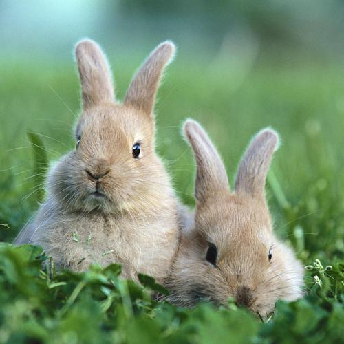 Cute bunny couple on the grass
