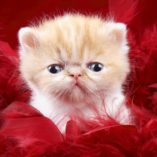 Cute cat in red wallpaper