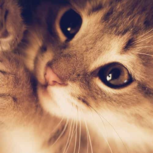 cute cat kitten nature animal
