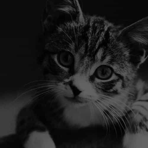 cute cat look dark bw animal love nature