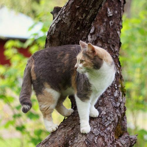 Cute cat on the tree wallpaper