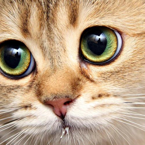 Cute Cat with big eyes wallpaper
