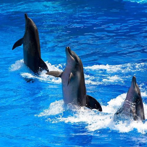 Cute dancing dolphins wallpaper