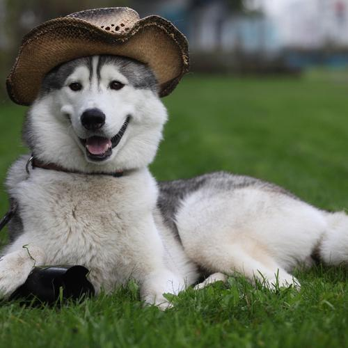 Cute dog with hat on Holiday wallpaper