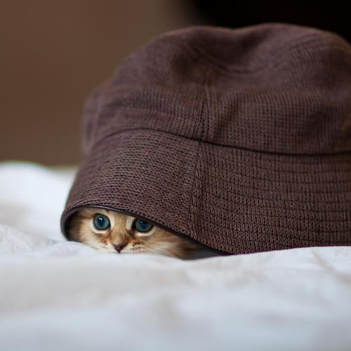 Cute kitten hide in the hat