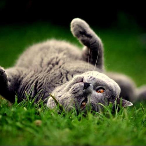 Cute kitten lying in the grass wallpaper