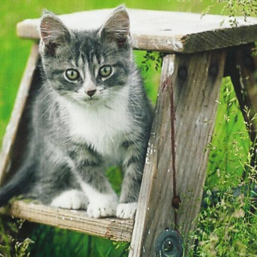 Cute Kitten On A Stepladder