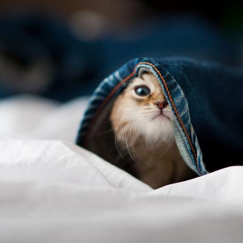 Cute kitten under jean pant wallpaper