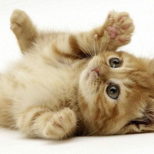 Download Cute kitten High quality wallpaper