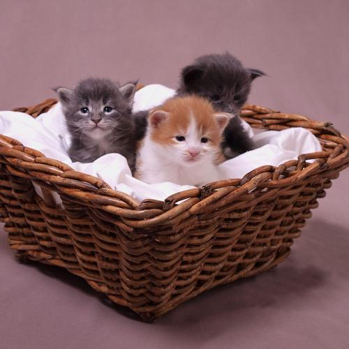 Cute kittens in a basket