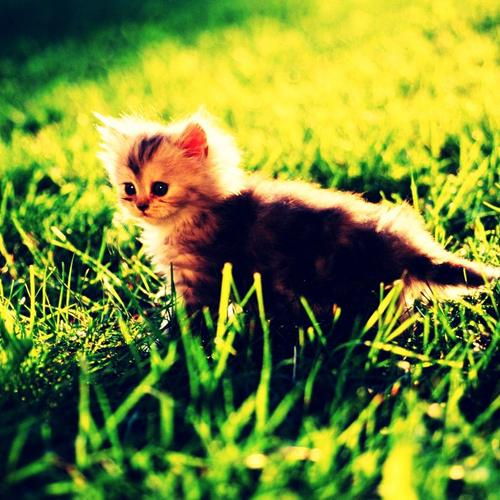 Cute kitty on the lawn in the summer light