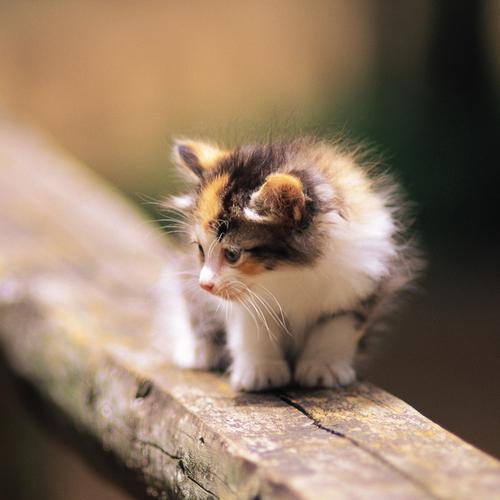 Cute little kitten on wood fence