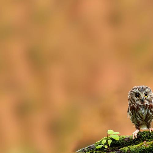 Cute little young owl macro shot