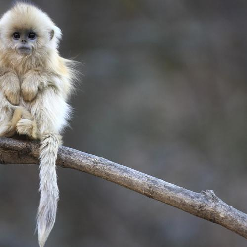 Cute white monkey