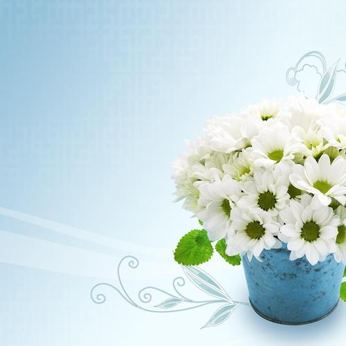Daisy bouquet fonds d