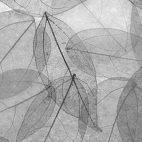 dark bw leaf art fall nature pattern