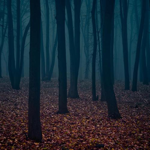 Dark forest in autumn wallpaper