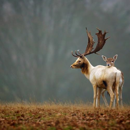 Deer and its child