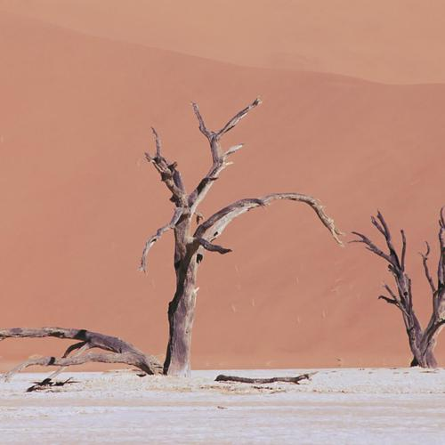 Desert Drought wallpaper