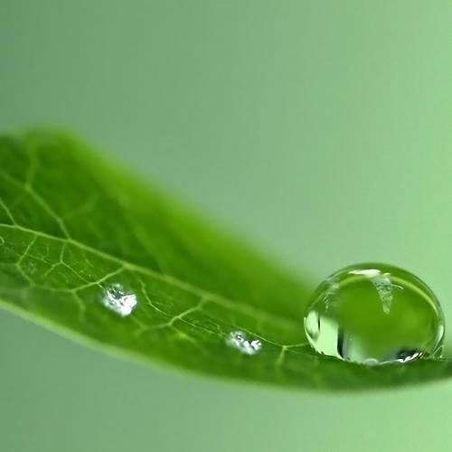 Diamond waterdrop on the leaf close up wallpaper