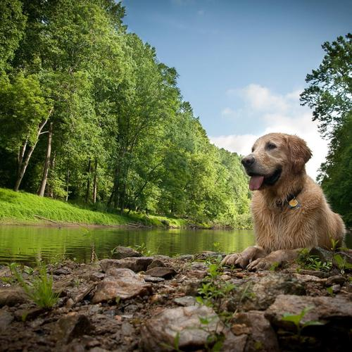 Dog beside the river wallpaper