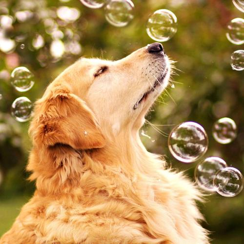 Dog enjoy Playing with bubbles